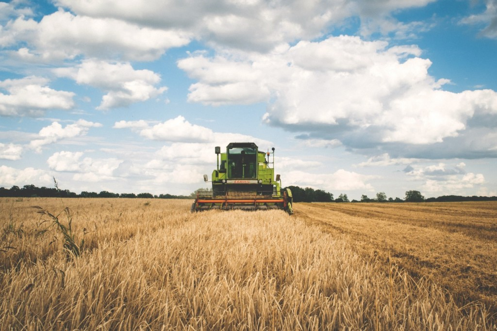 eating organic farming tractor in a field of grain